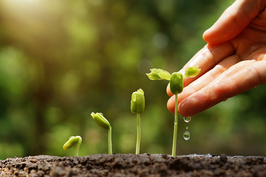 seeds of growth