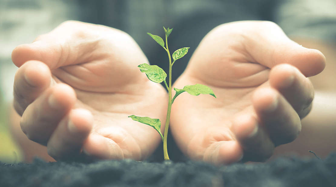 Small plant growing out fo the ground