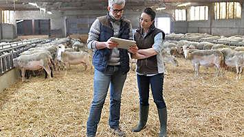 Farmers in barn looking at paperwork.