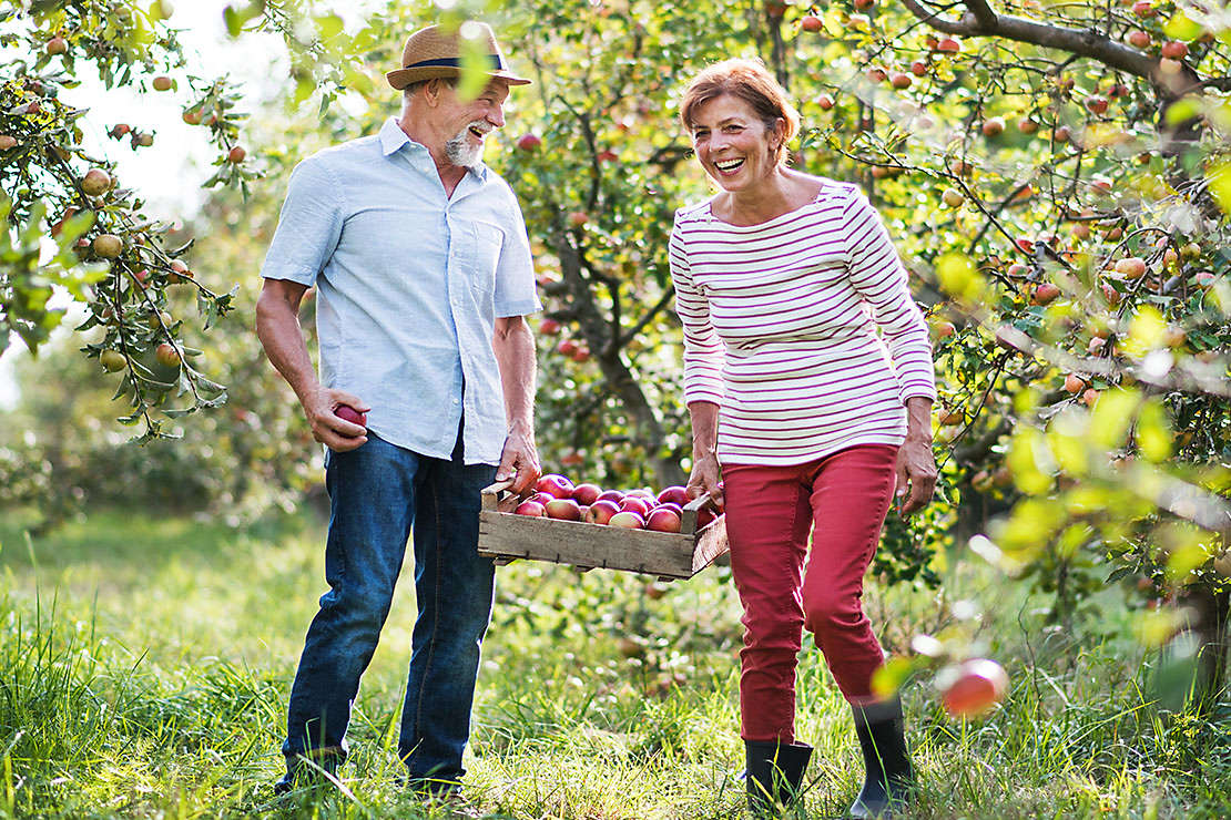 older married couple enjoying apple picking.