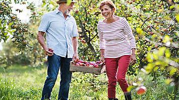 older married couple enjoying apple picking.